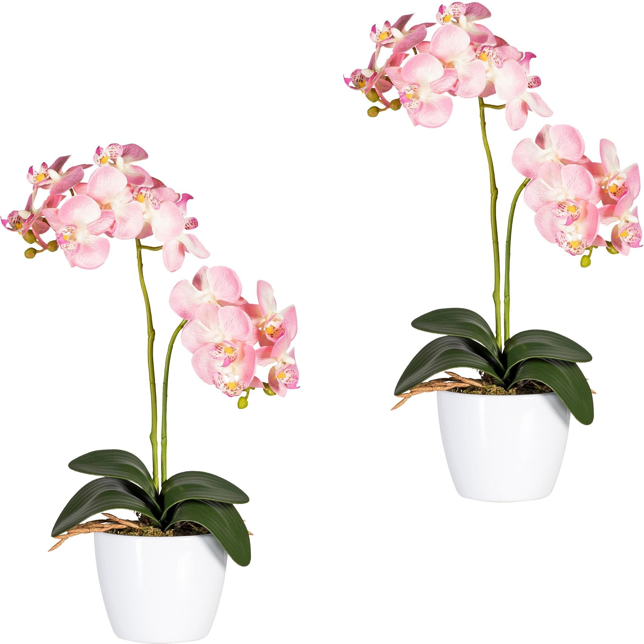 Creativ green kunstplant »Phalaenopsis« goedkoop op otto.nl kopen