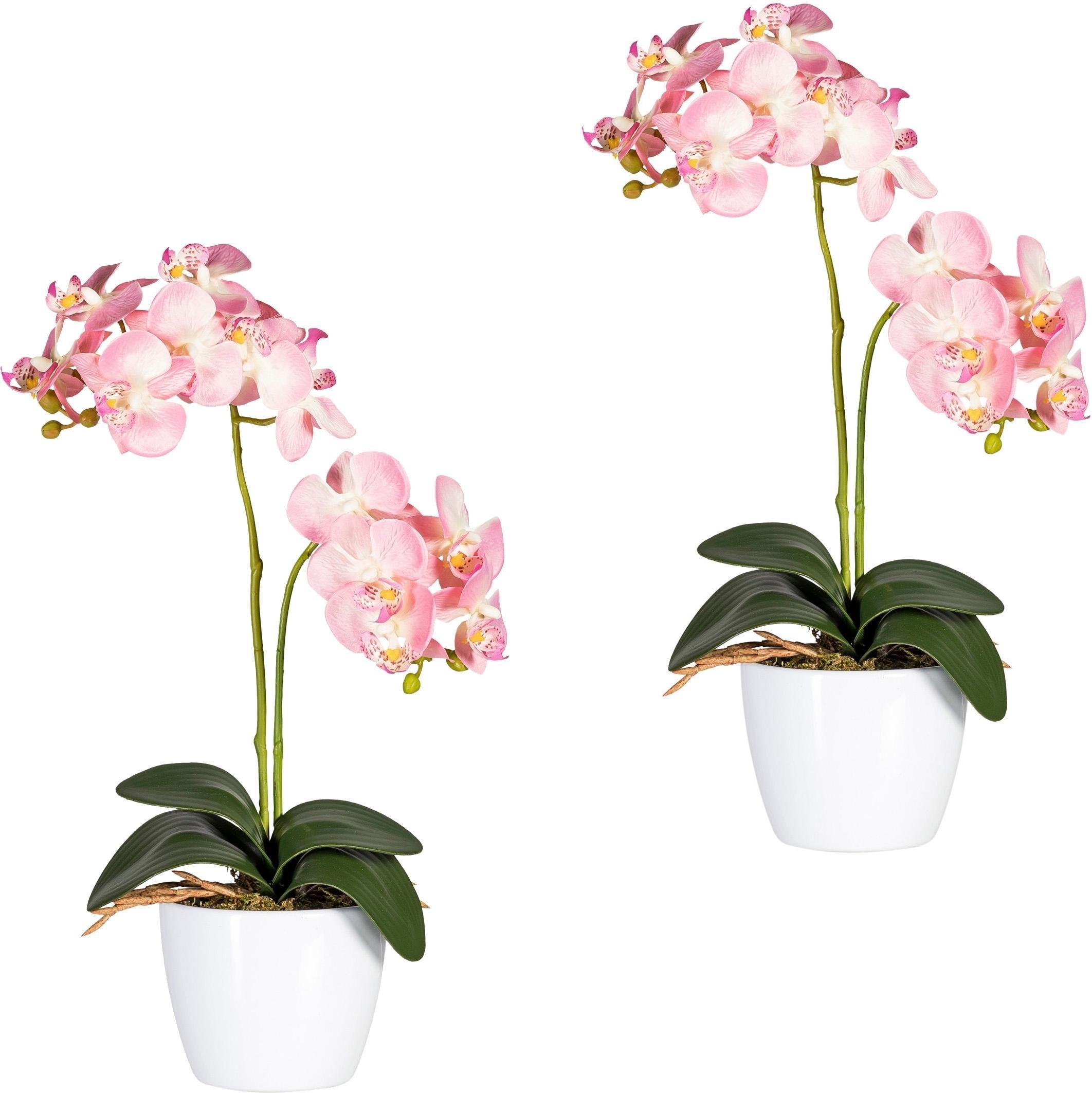 Creativ green kunstplant Vlinderorchidee (set, 2 stuks) goedkoop op otto.nl kopen