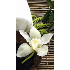 wall-art vliesbehang wellness orchidee multicolor