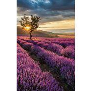 wall-art vliesbehang lavendelbloemen in de provence multicolor