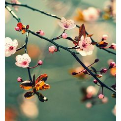 fotobehang »fruehlingserwachen (farbig)« multicolor
