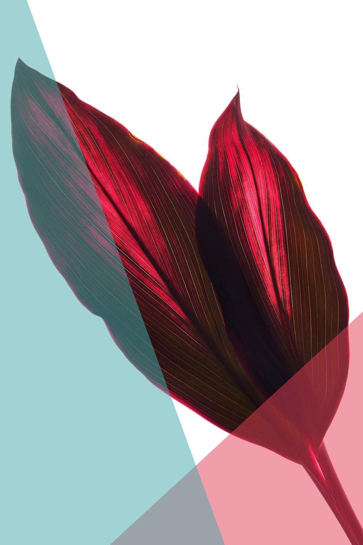 queence artprint op acrylglas »Blätter« nu online kopen bij OTTO