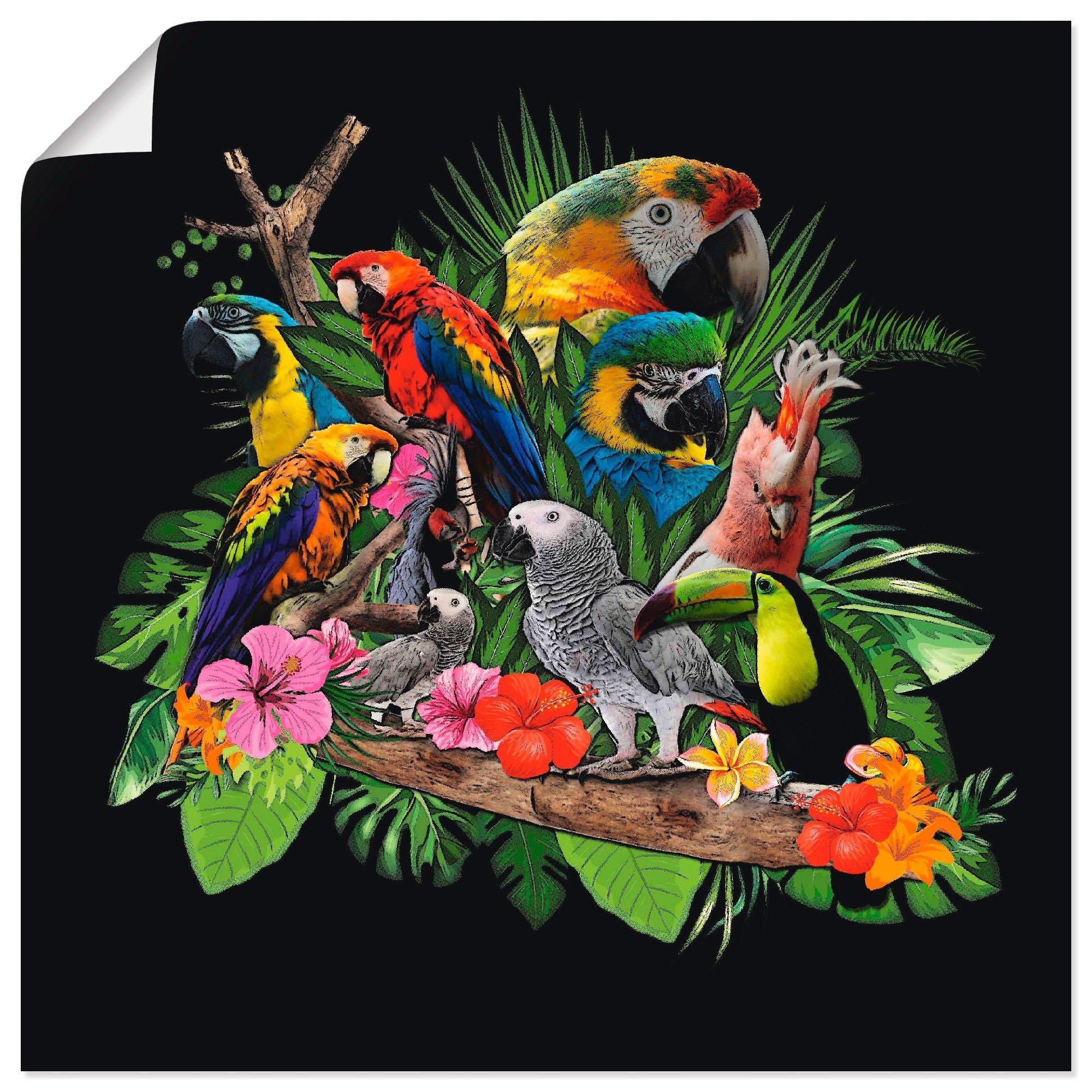 Artland artprint Papegaaien Grijze Papegaai Kaketoe Jungle in vele afmetingen & productsoorten - artprint van aluminium / artprint voor buiten, artprint op linnen, poster, muursticker / wandfolie ook geschikt voor de badkamer (1 stuk) goedkoop op otto.nl kopen