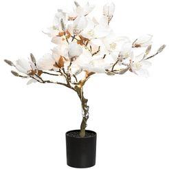 led-boom »magnolie«