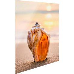 print op glas »muschelpalast« beige
