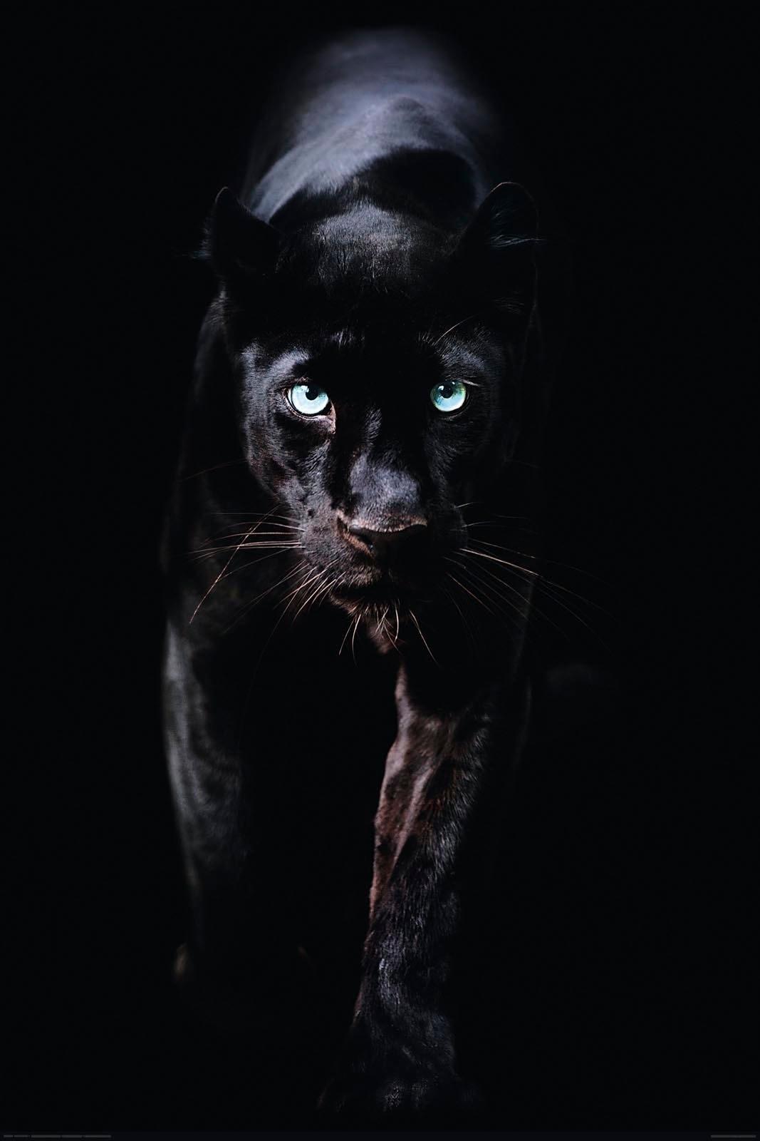 Reinders! decoratief paneel Schwarzer Panther in de webshop van OTTO kopen