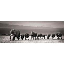 reinders! artprint olifantenparade grijs