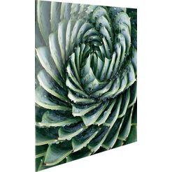 print op glas »agave rosette« groen