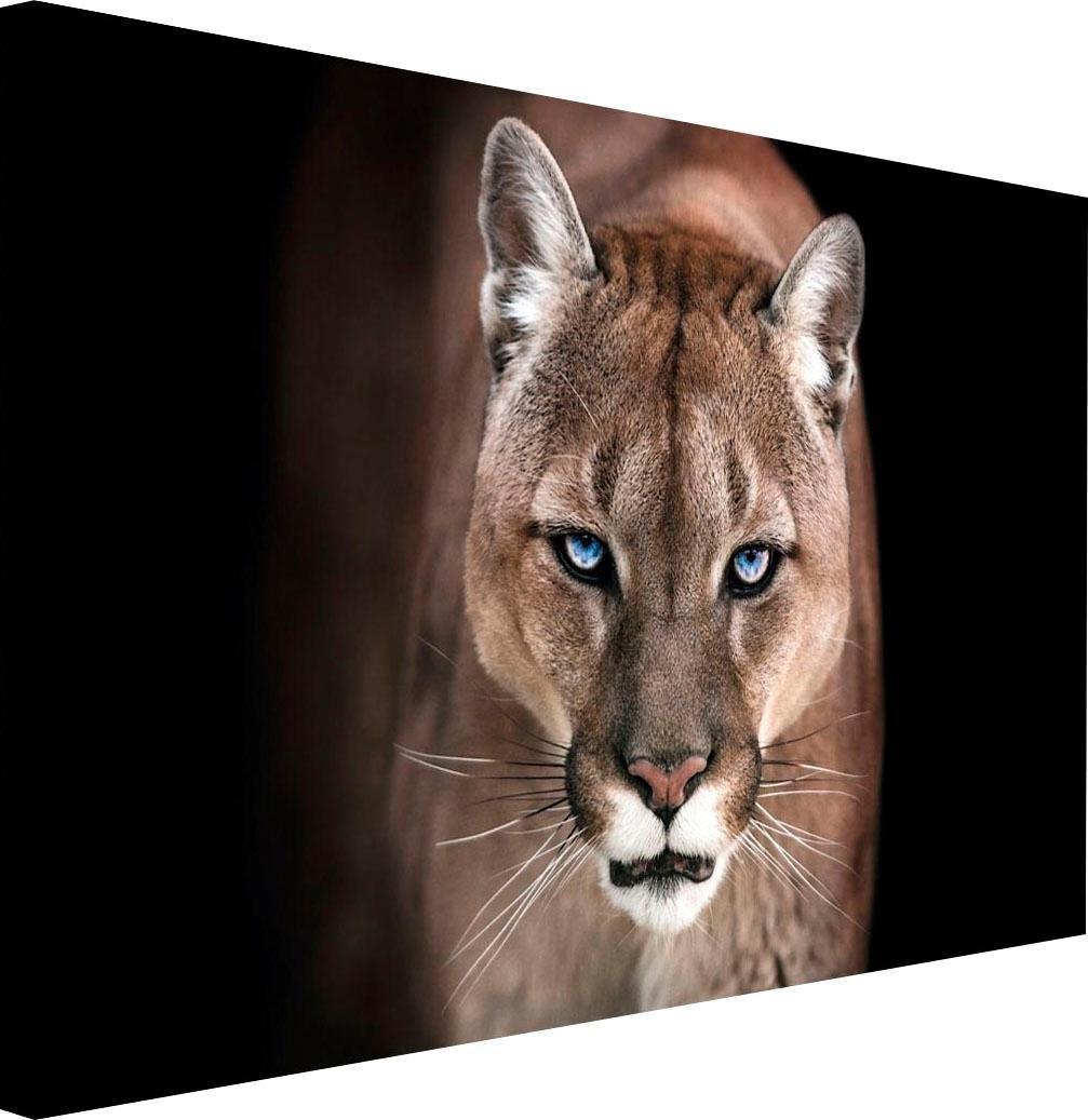 Reinders! artprint Puma nu online bestellen