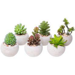 botanic-haus kunstcactus vetplanten (set, 6 stuks) groen