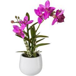 creativ green kunstplant japanse orchidee in een keramieken pot, voelt echt aan (1 stuk) roze