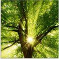 artland print op glas zon straalt explosief door de boom (1 stuk) groen
