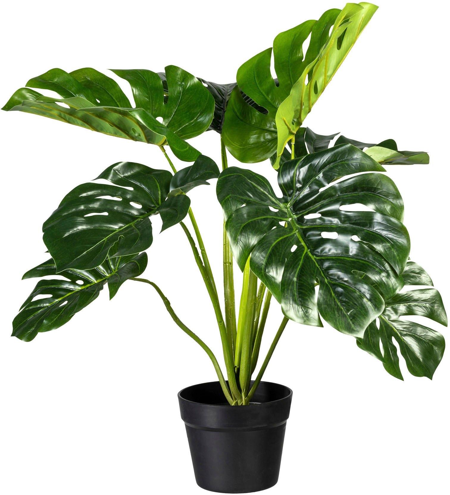 Creativ green kunst-potplanten »Splitphilodendron« goedkoop op otto.nl kopen
