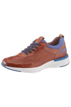 lloyd sneakers »babylon« bruin
