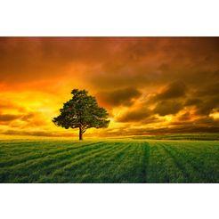 bmd fotobehang »horizon sunset« multicolor