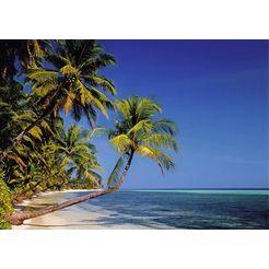 bmd fotobehang »palmenstrand« multicolor