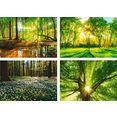 artland poster bos beek voorjaar windroos zon boom poster, artprint, wandposter (4 stuks) groen