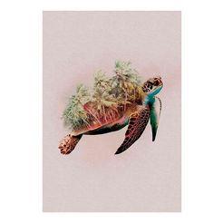 komar xxl poster »animals paradise turtle« multicolor