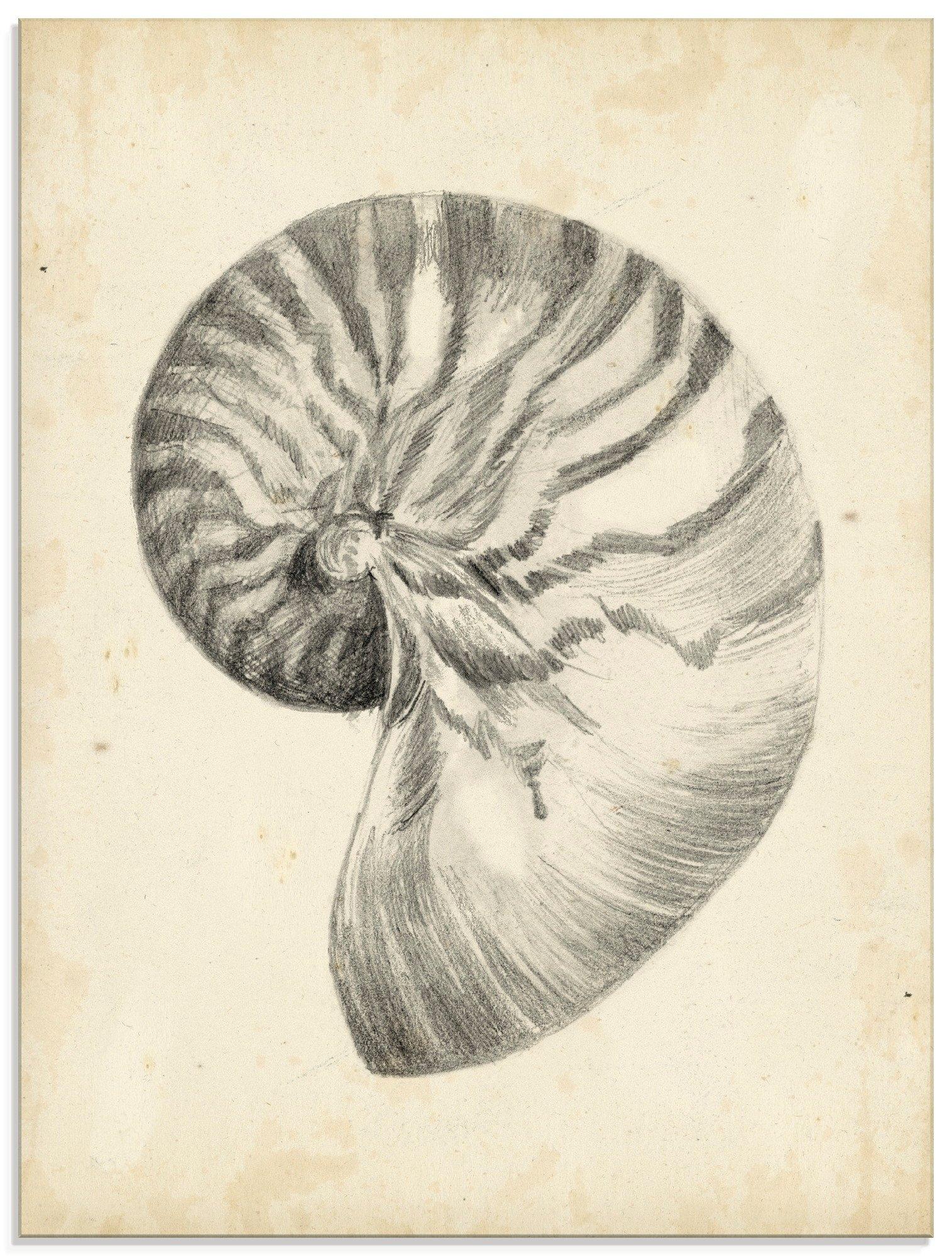 Artland print op glas Antieke schelp leeg I (1 stuk) goedkoop op otto.nl kopen