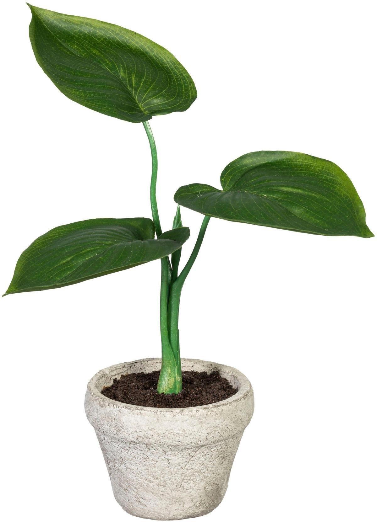 Creativ Green kunst-potplanten »Set aus Grünpflanzen« goedkoop op otto.nl kopen