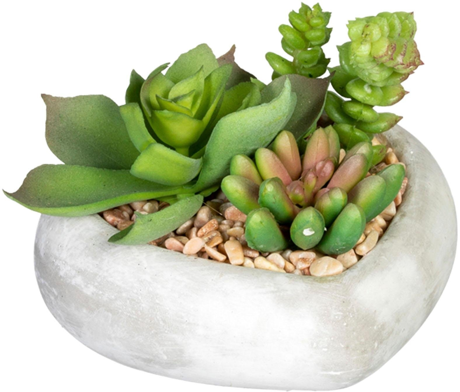 Creativ Green kunst-potplanten »Sukkulentenarrangement« voordelig en veilig online kopen