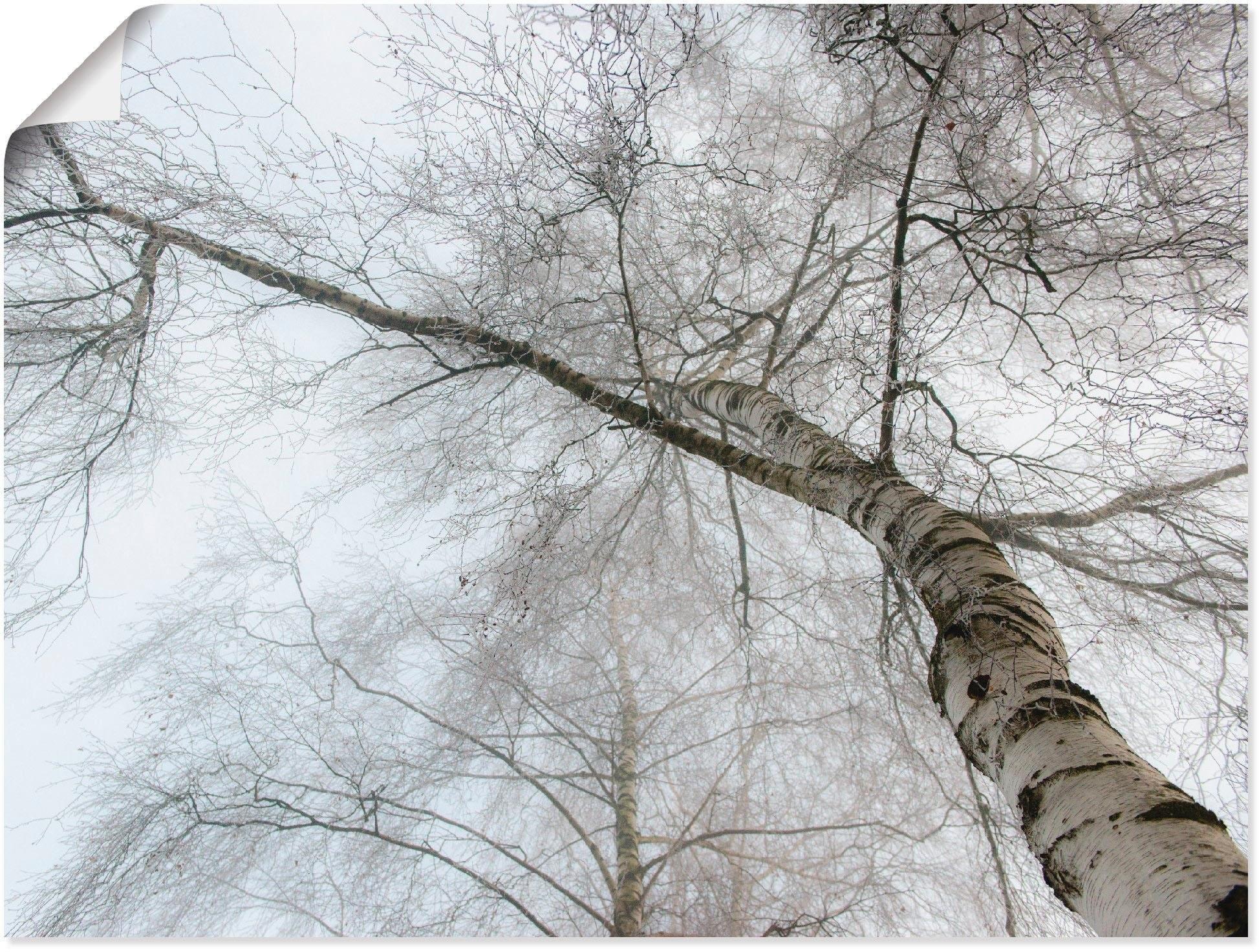 Artland artprint »Winter Birke« bestellen: 30 dagen bedenktijd