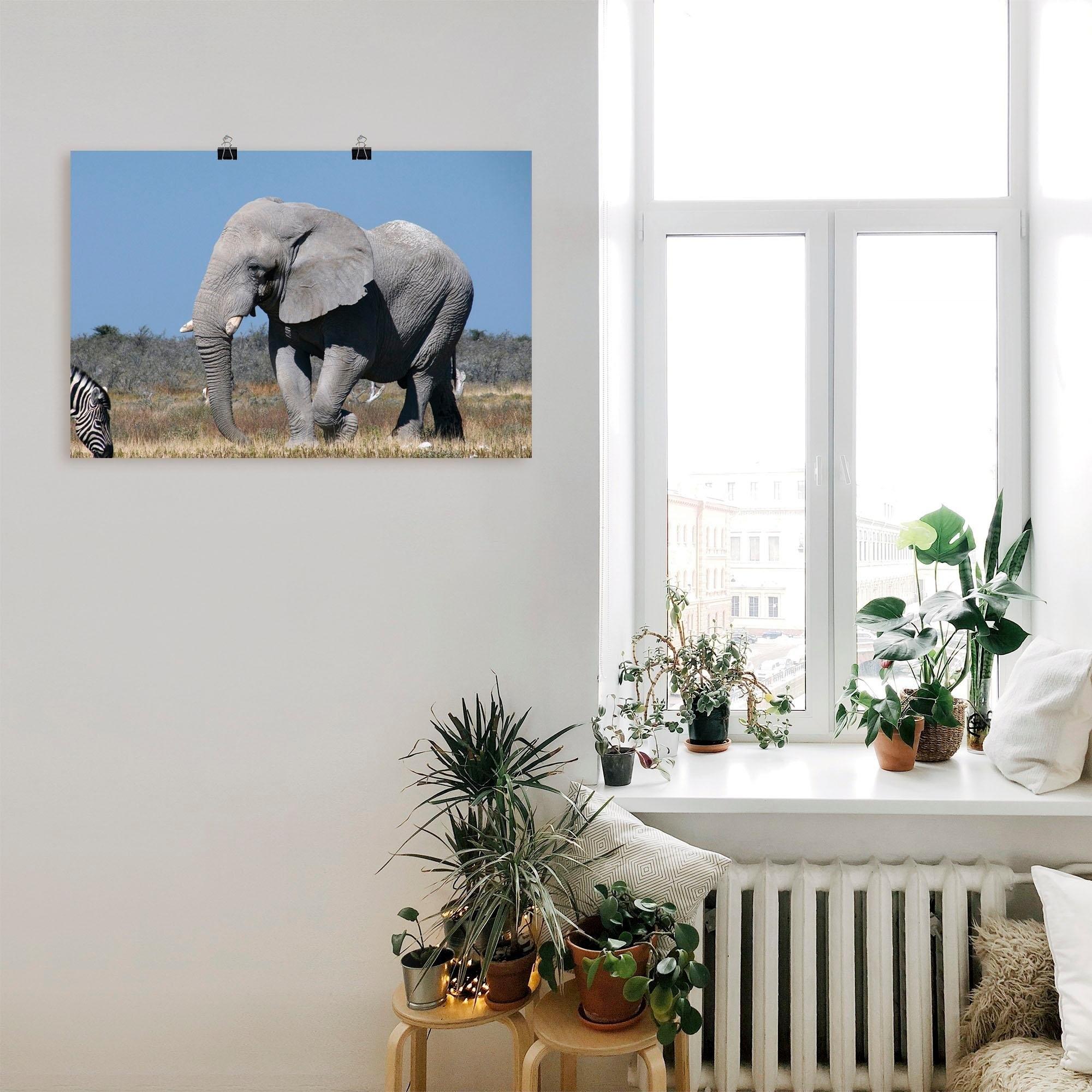 Artland artprint »Afrikanischer Elefant« bij OTTO online kopen