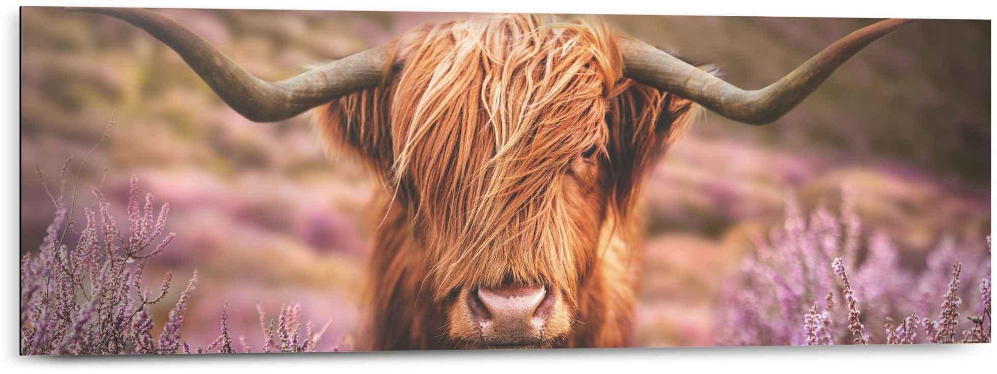 Reinders! artprint Schotse hooglander (1 stuk) bestellen: 30 dagen bedenktijd