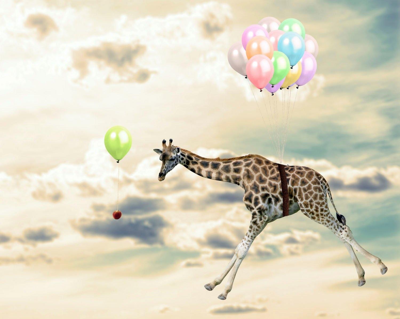 queence artprint op acrylglas Vliegende giraf veilig op otto.nl kopen