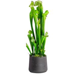 bluetenwerk kunstplant cobralelie (1 stuk) groen