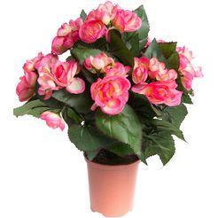 botanic-haus kunstbloem begonia in pot (1 stuk) roze