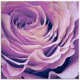 artland print op glas paars roos (1 stuk) paars