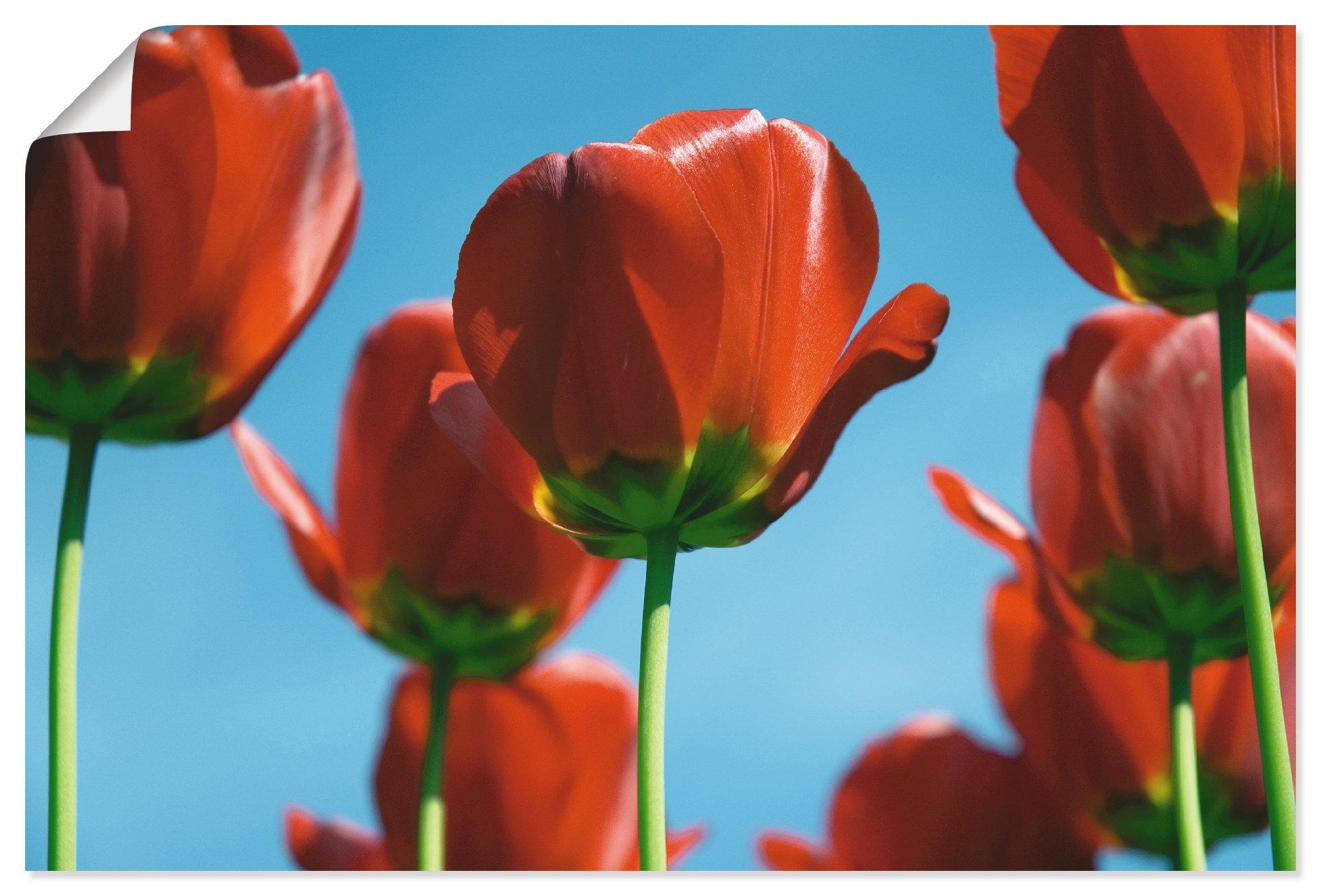 Artland artprint Tulpen in vele afmetingen & productsoorten - artprint van aluminium / artprint voor buiten, artprint op linnen, poster, muursticker / wandfolie ook geschikt voor de badkamer (1 stuk) - verschillende betaalmethodes