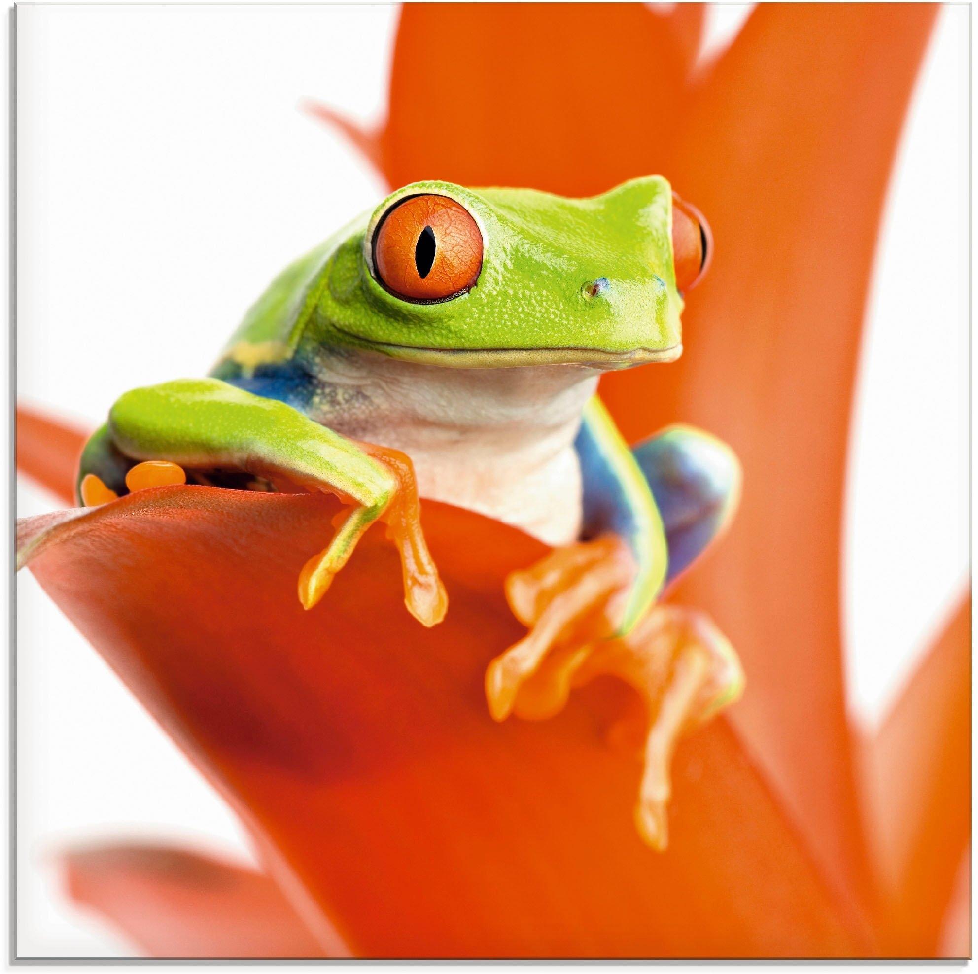 Op zoek naar een Artland print op glas »Frosch auf seinem Thron«? Koop online bij OTTO