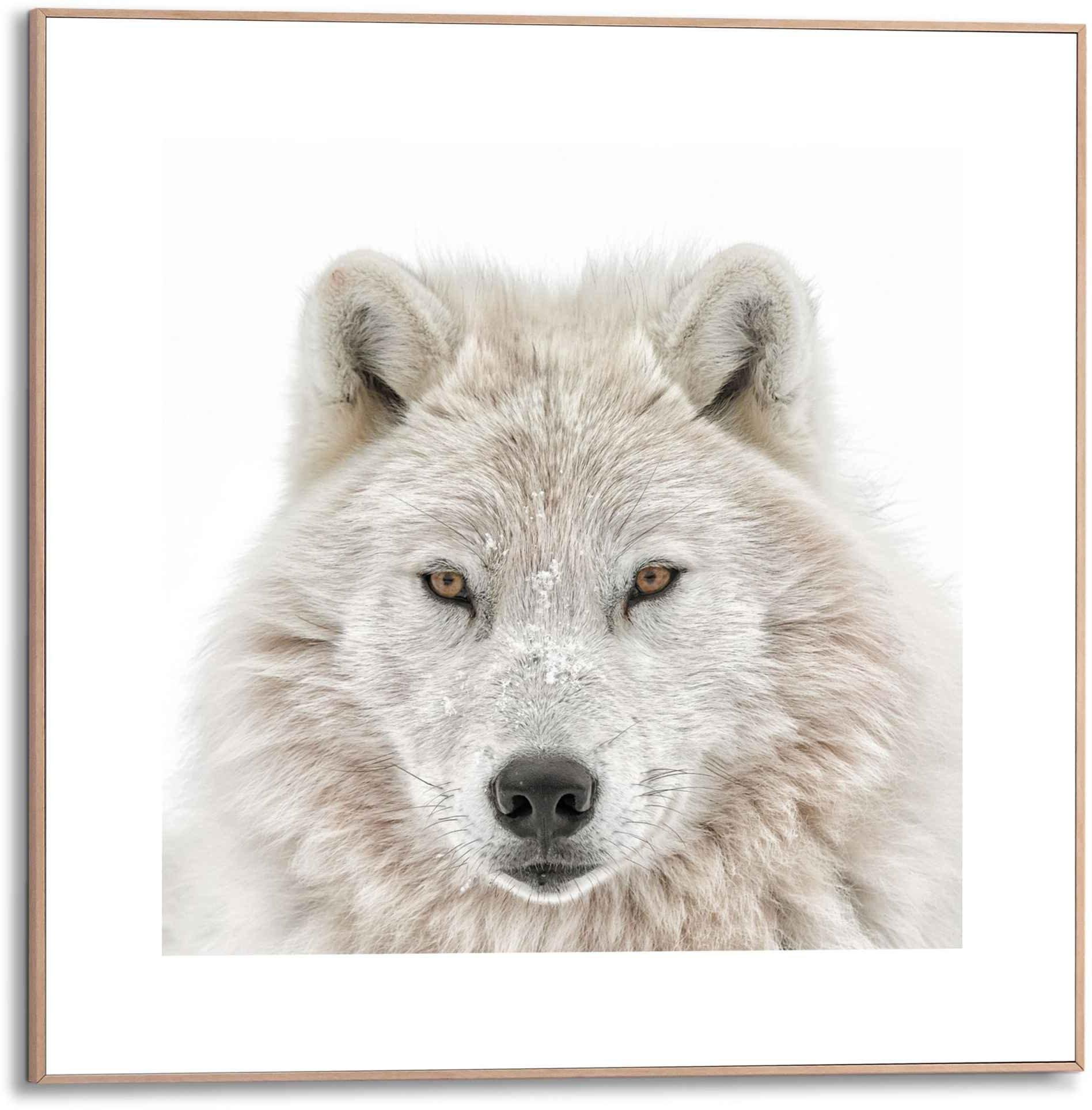 Reinders! artprint Gerahmtes Bild Wolf (1 stuk) - verschillende betaalmethodes