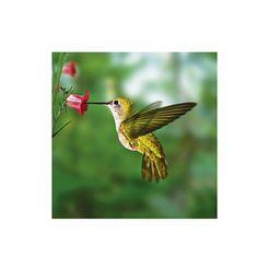 home affaire glazen artprint »humming bird«, 30x30 cm groen