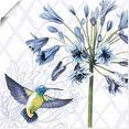 artland artprint kolibrie dans ii in vele afmetingen  productsoorten - artprint van aluminium - artprint voor buiten, artprint op linnen, poster, muursticker - wandfolie ook geschikt voor de badkamer (1 stuk) paars