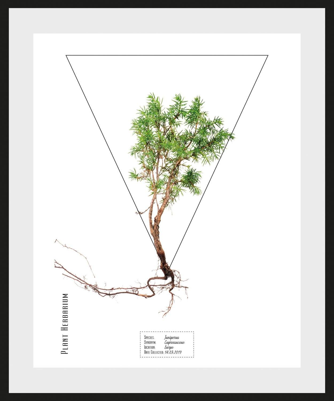queence wanddecoratie Juniperus (1 stuk) - verschillende betaalmethodes