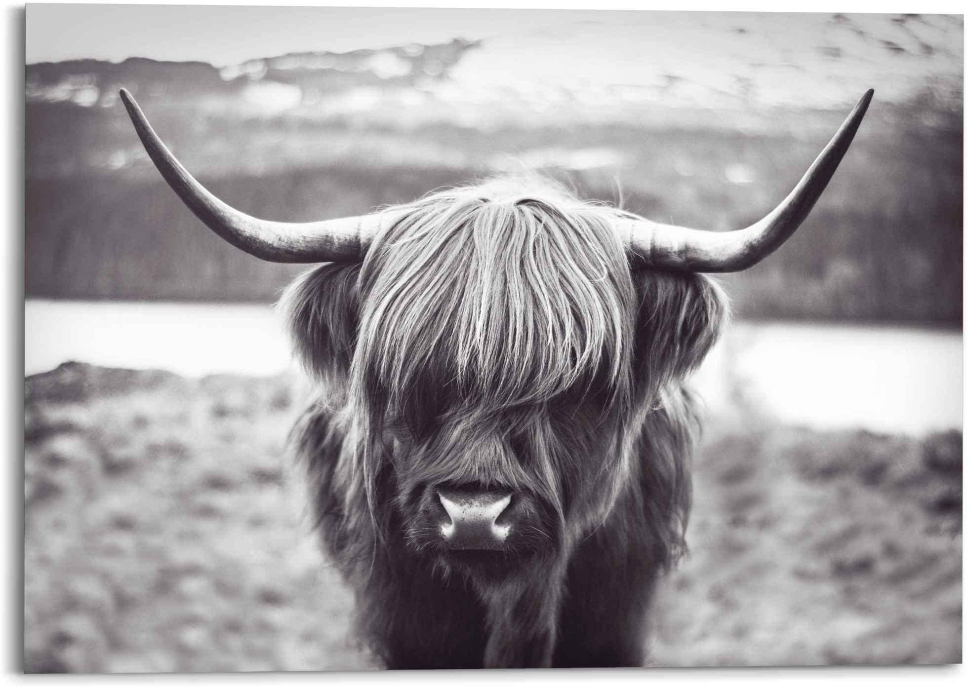 Reinders! artprint Wandbild Hochländer Kuh Kräftig - Ochs - Hörner - Stier (1 stuk) bij OTTO online kopen
