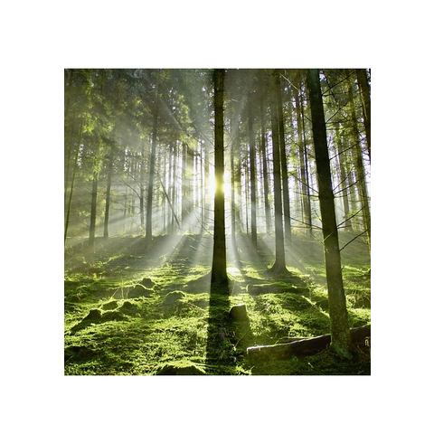 Glazen artprint, in 2 afm. 'Bos in tegenlicht'