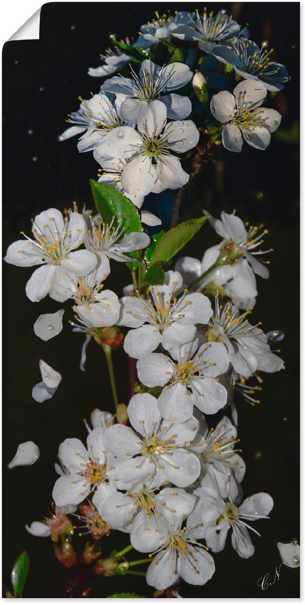 Op zoek naar een Artland artprint »Baumblüte«? Koop online bij OTTO