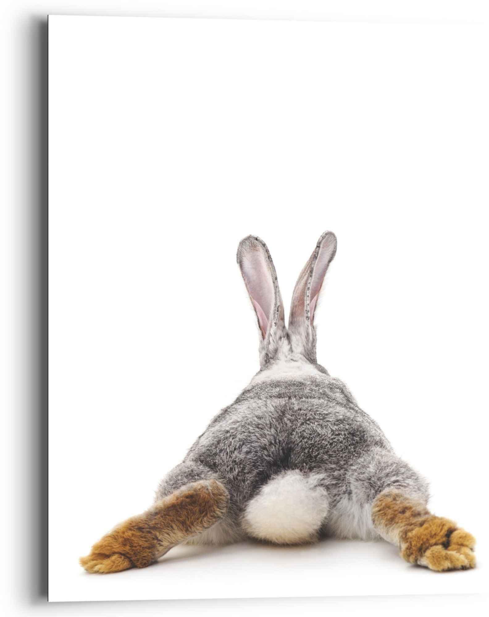 Reinders! artprint konijn rabbit - haas - staart - relax (1 stuk) - verschillende betaalmethodes