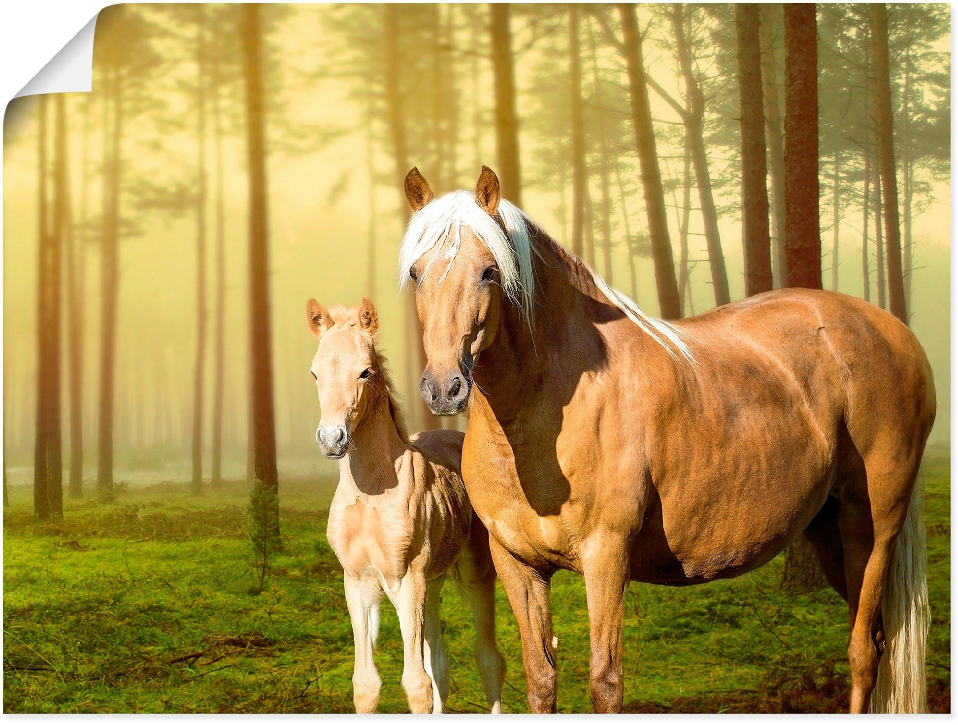 Op zoek naar een Artland artprint Paarden in de velden II in vele afmetingen & productsoorten - artprint van aluminium / artprint voor buiten, artprint op linnen, poster, muursticker / wandfolie ook geschikt voor de badkamer (1 stuk)? Koop online bij OTTO