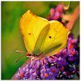 artland print op glas vlinder in de tuin (1 stuk) geel