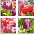 artland artprint op linnen voorjaar en tulpen (4 stuks) roze