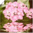 artland artprint hortensia in vele afmetingen  productsoorten - artprint van aluminium - artprint voor buiten, artprint op linnen, poster, muursticker - wandfolie ook geschikt voor de badkamer (1 stuk) roze