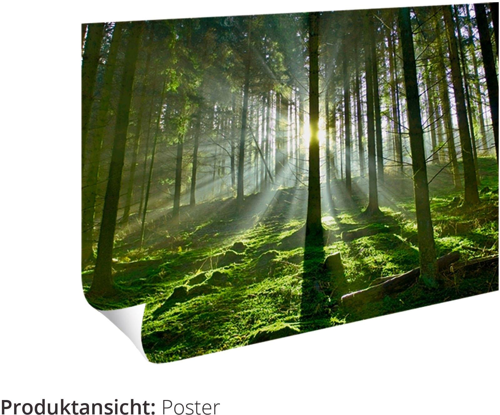 Artland artprint »Trünnensee Mecklenburger Seenplatte« bestellen: 30 dagen bedenktijd