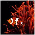 artland print op glas clown vis met koraal (1 stuk) oranje