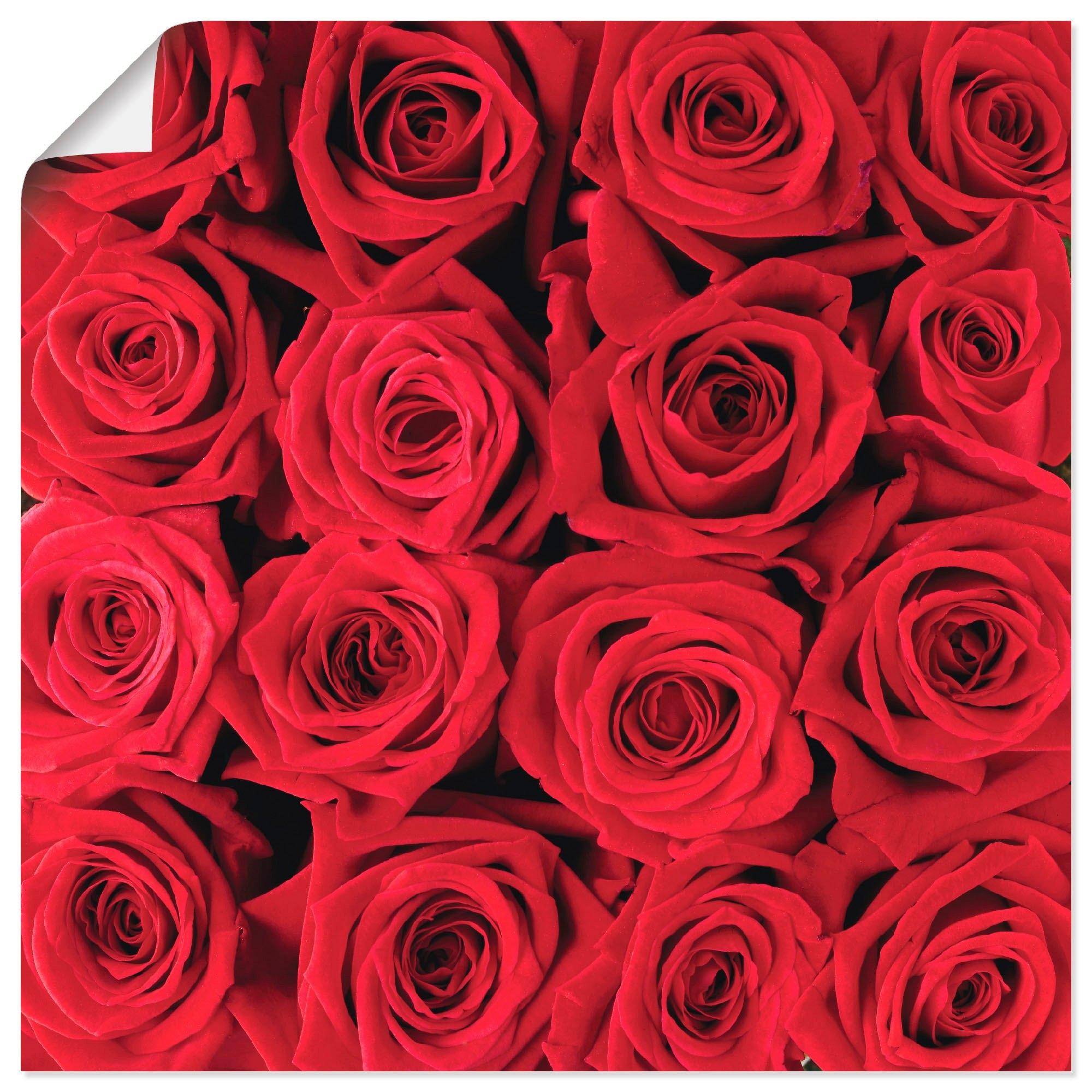 Artland artprint Rode rozencreatie in vele afmetingen & productsoorten -artprint op linnen, poster, muursticker / wandfolie ook geschikt voor de badkamer (1 stuk) veilig op otto.nl kopen