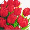 artland artprint rode tulpen in vele afmetingen  productsoorten - artprint van aluminium - artprint voor buiten, artprint op linnen, poster, muursticker - wandfolie ook geschikt voor de badkamer (1 stuk) rood